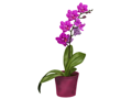 Pretty Potted Orchids