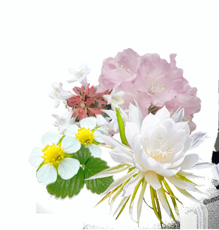 花酵母 画像