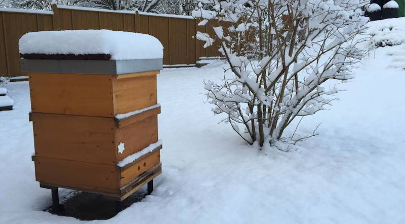 Schneebedeckte Bienenbeute