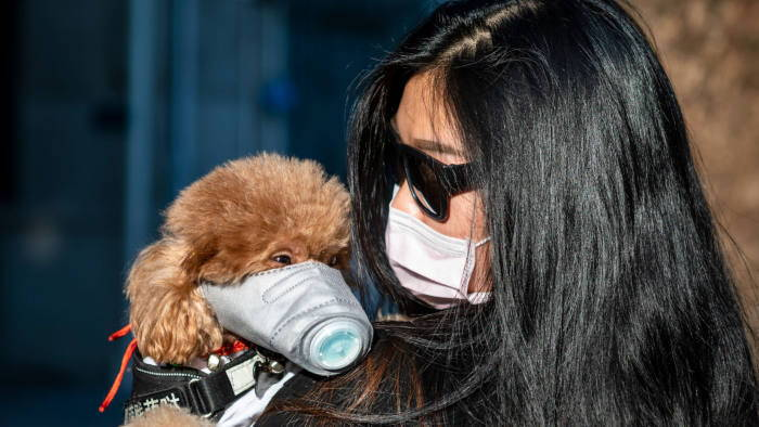 coronavirus dog mask