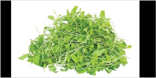 Green Mustard Microgreens