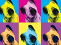 Your Pet Could Be the Face of Picasso Pets 2019