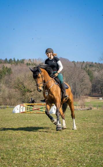 Kunststoffbeschlag, springen, pferd, stollen, klebebeschlag