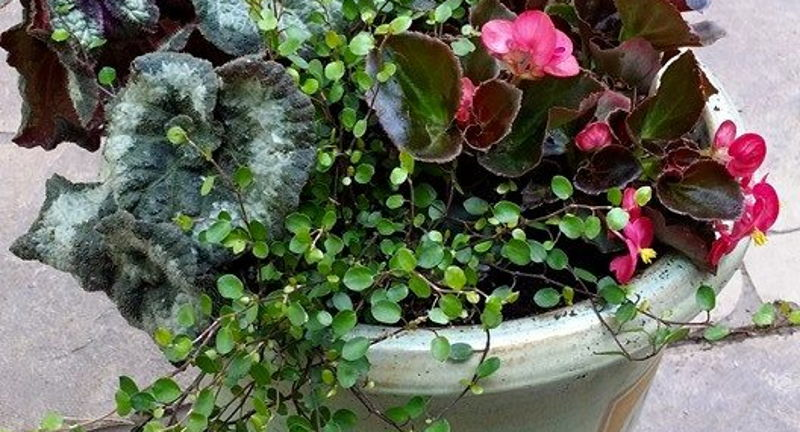 Learn Laugh & Love: Tips to Create Fabulous Container Gardens