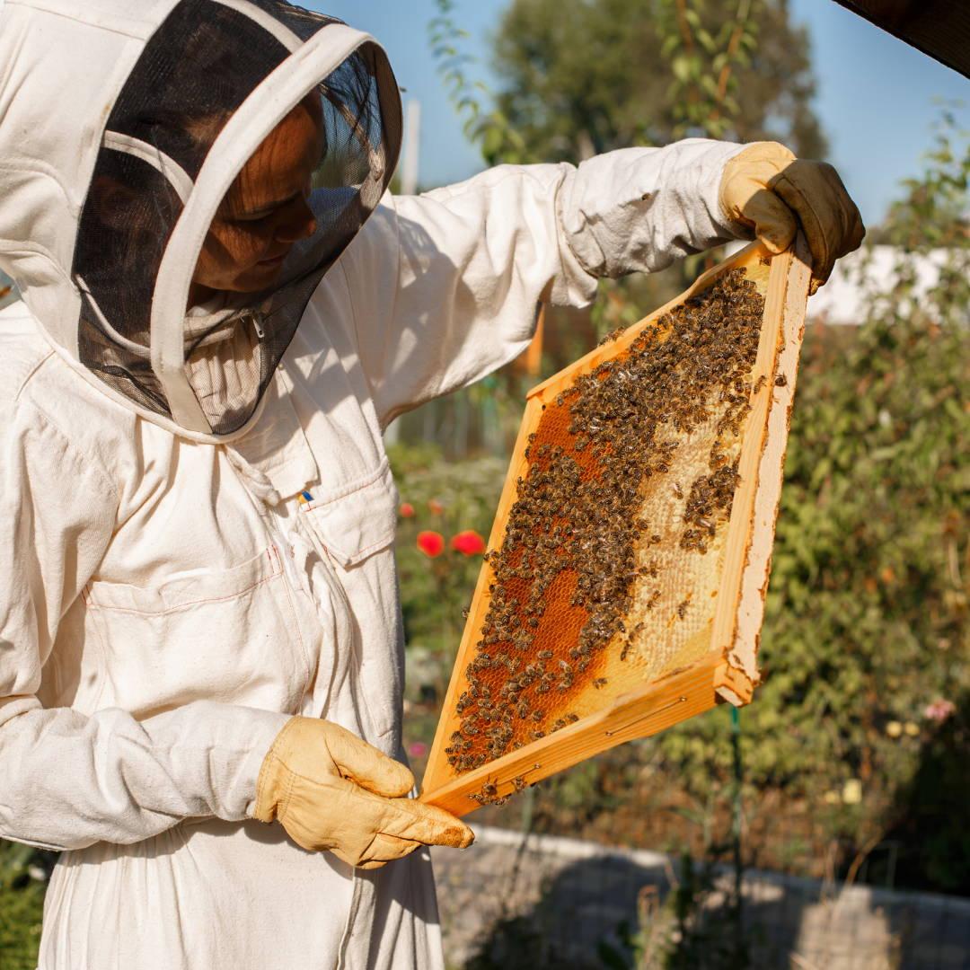 miel au cbd la chanvré cbd paris