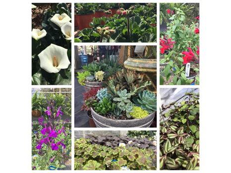 $50 Garden Spot Gift Card