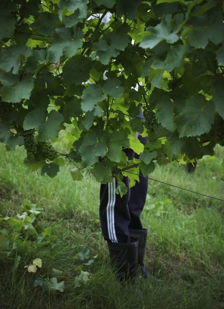 Neumeister Wein - Steiermark Weinland