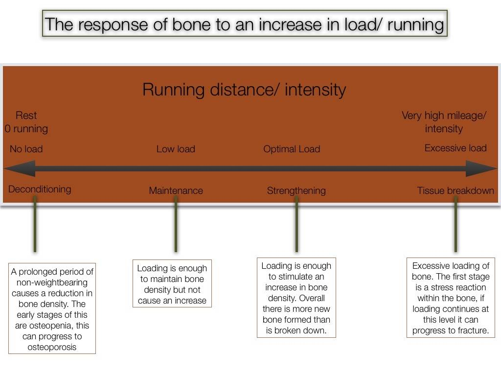 Bone stress in runners