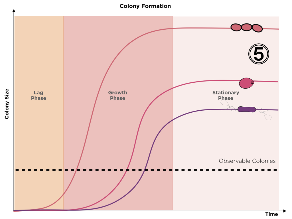 Graphic representing the colony formation through time