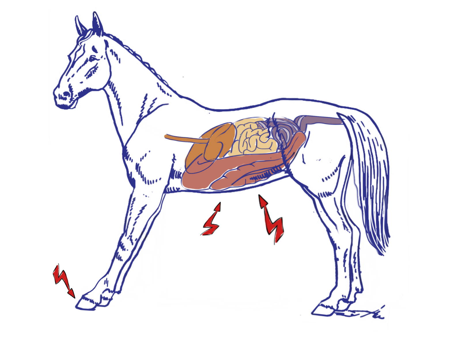 Drawing of a horse with a typical stance of laminitis