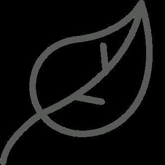 Leaf single