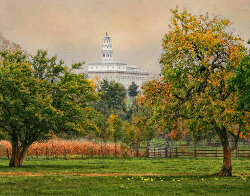 Nauvoo Temple picture with apple tree in foreground.