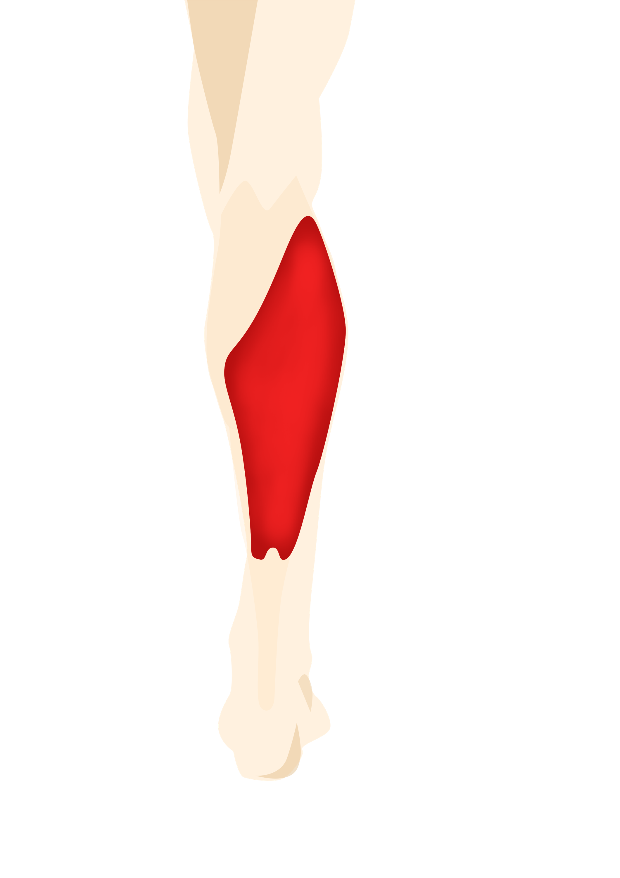 the soleus muscle