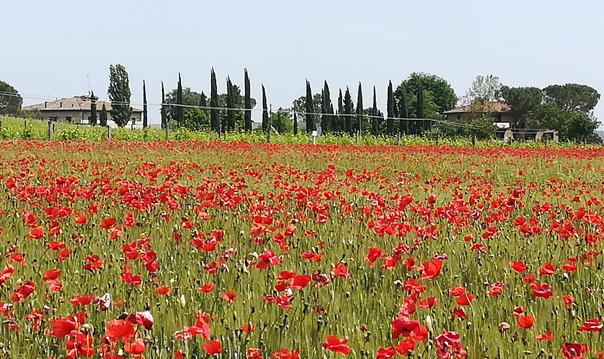 Монтепульчано и Пьенца - типичная тосканская провинция
