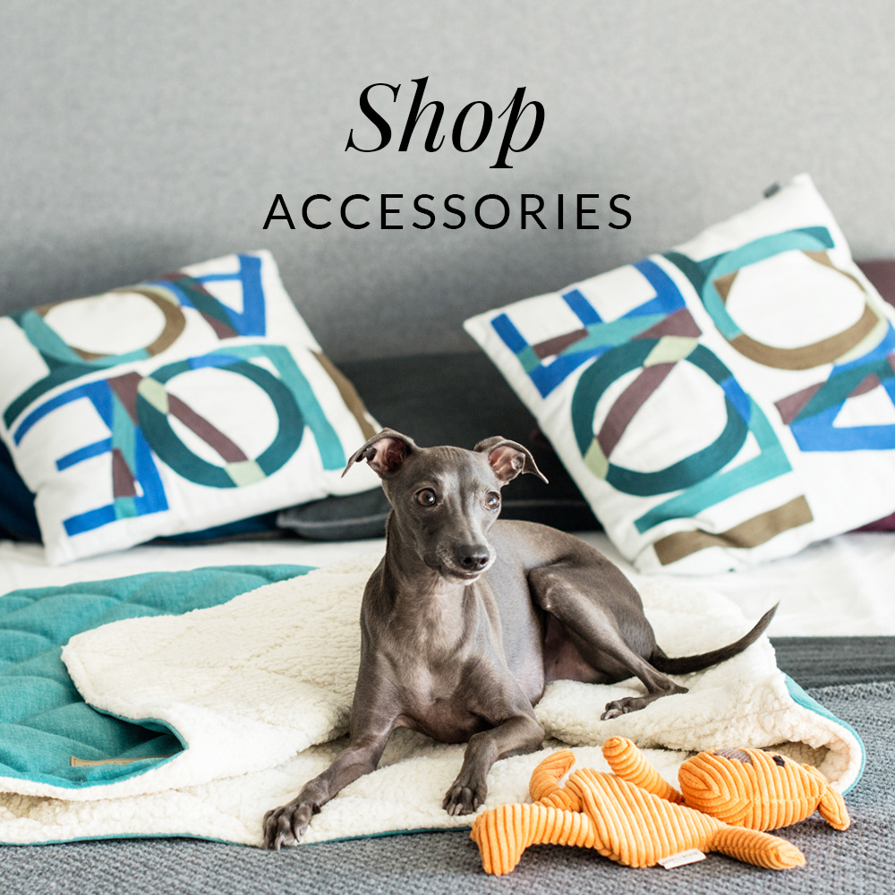 Shop Pet Accessories
