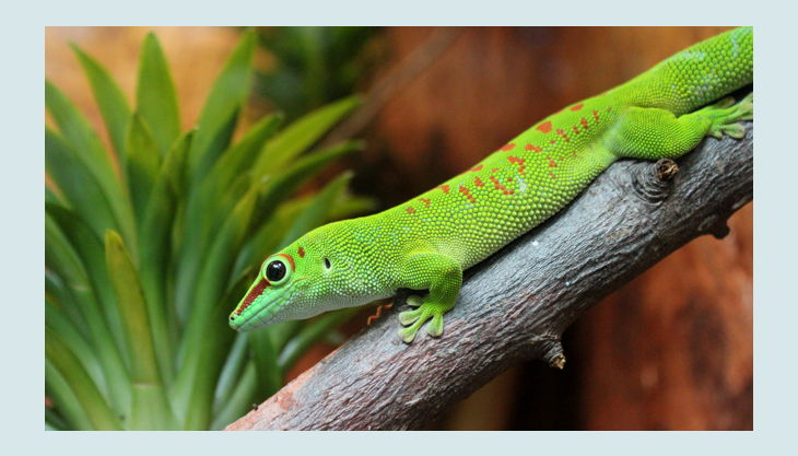 taggecko in der biosphäre potsdam