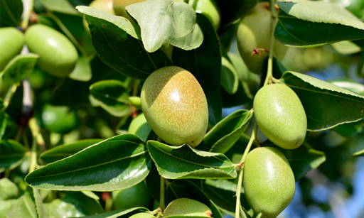 Jojoba Oil It is a highly pure mineral and does not require enriching processes