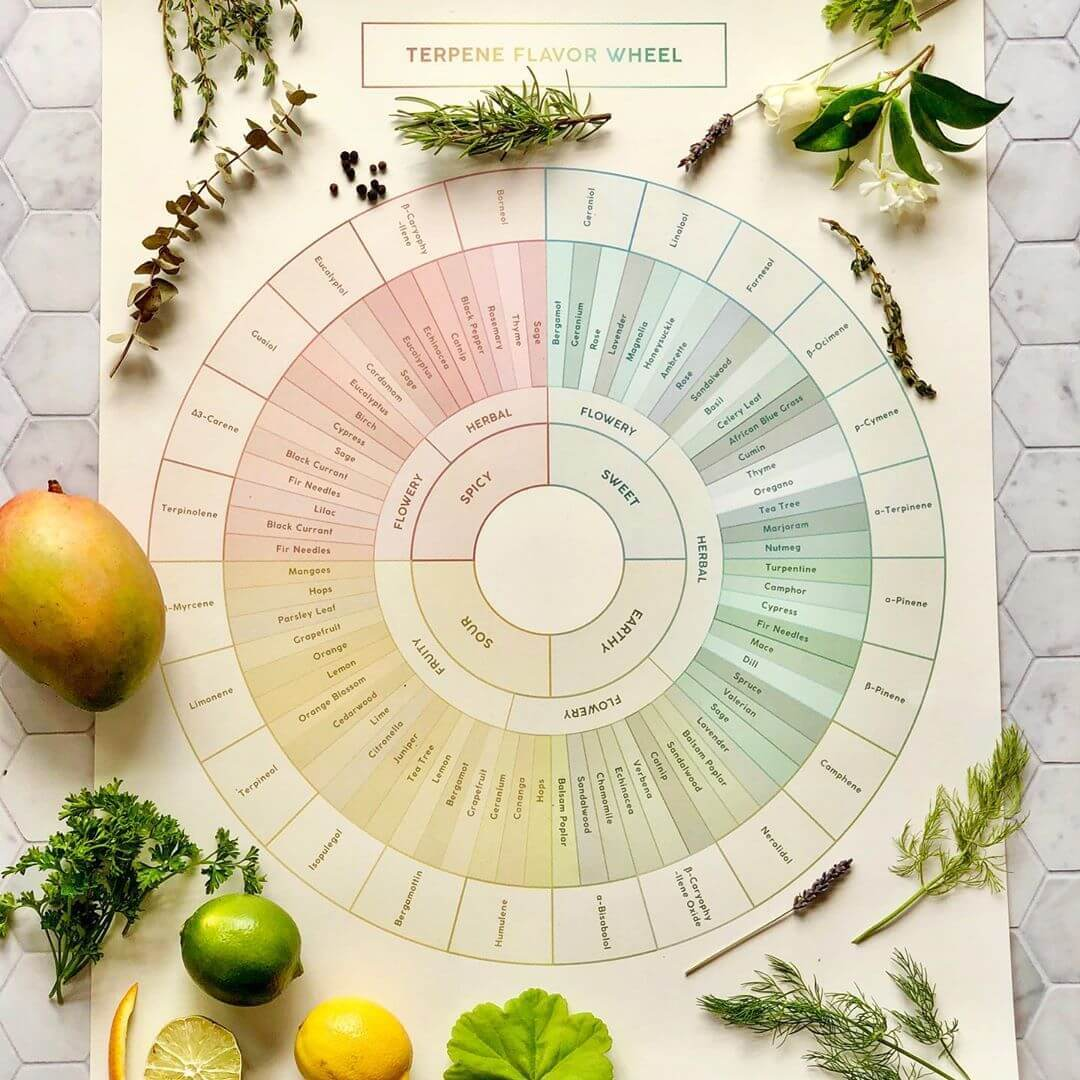 Terpene Flavor Wheel Diagram by Goldleaf