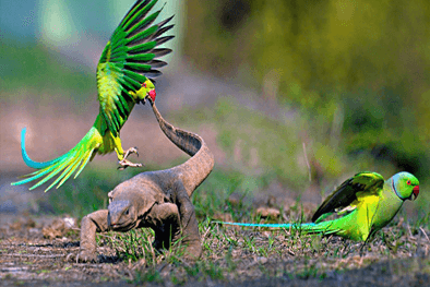 Bird-watching & Wildlife tour of Bharaptur, Rajasthan
