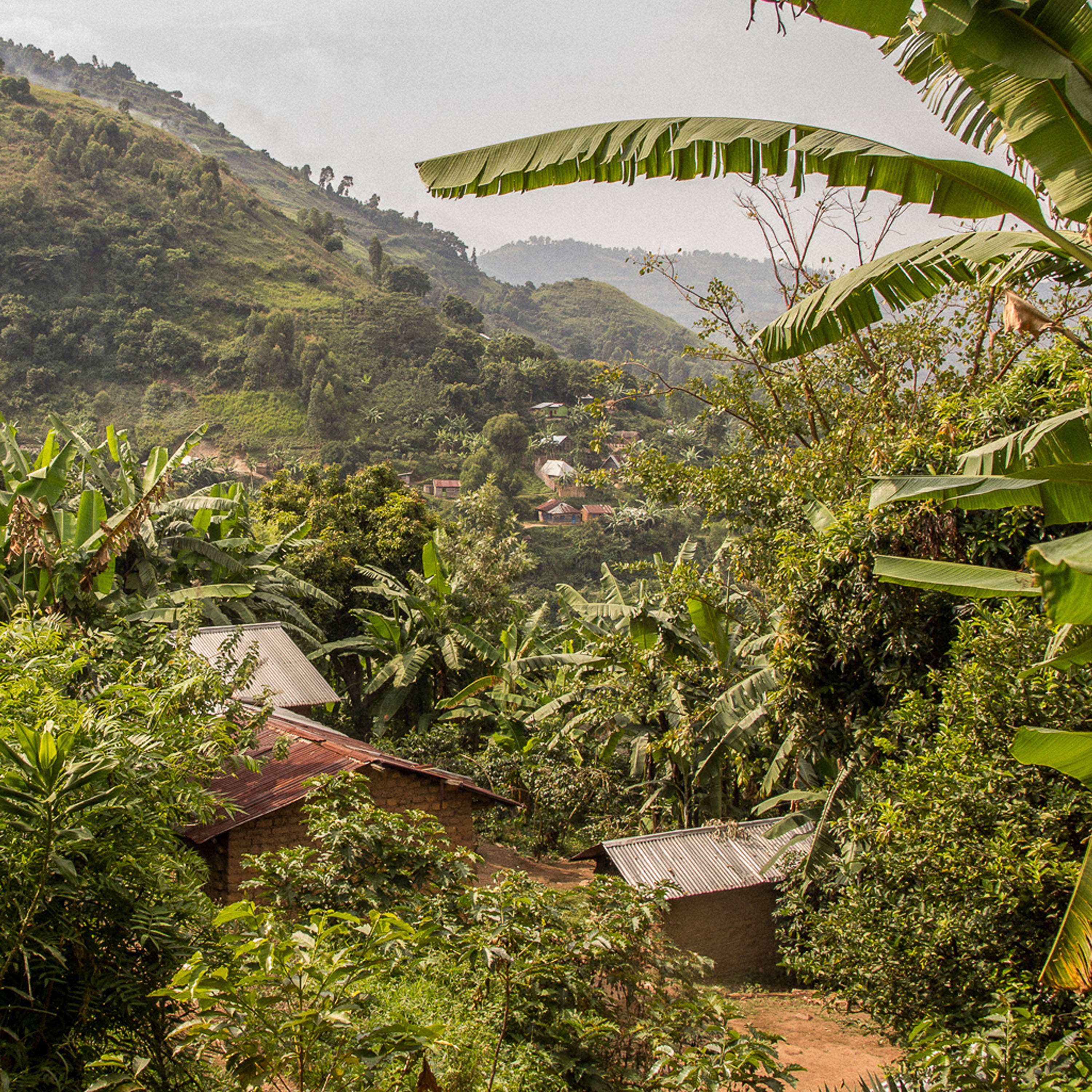 Congolese landscape  with river