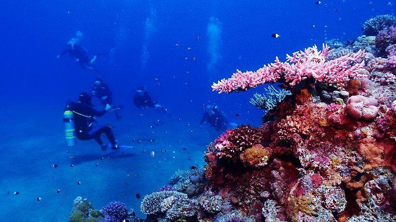 Red Sea underwater, Egypt