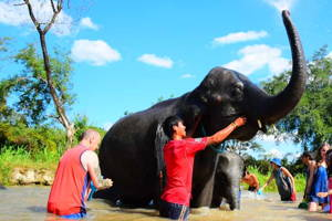Elephant care & White Water Rafting