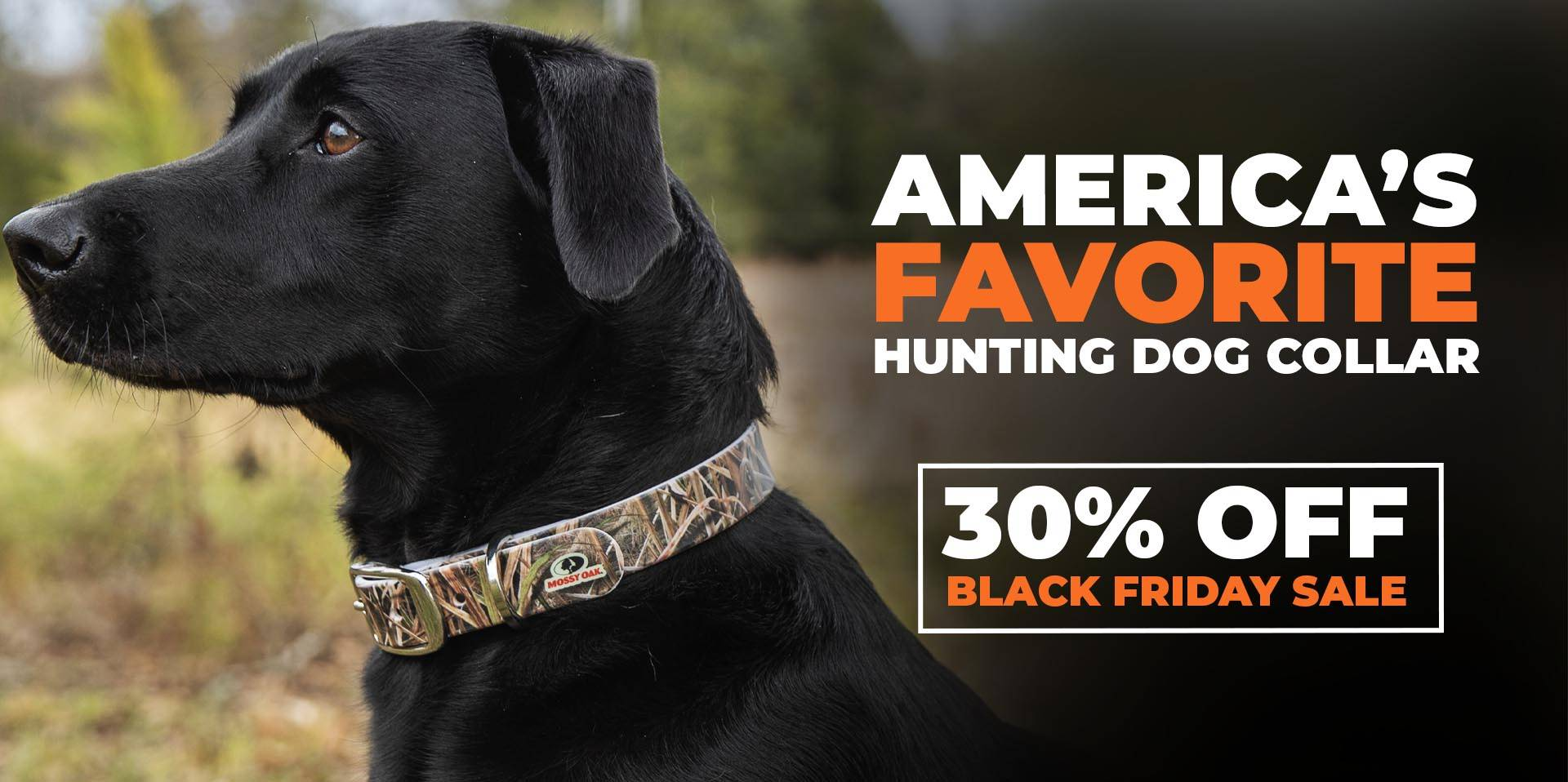 Black colored dog wearing a c4 hunting dog collar