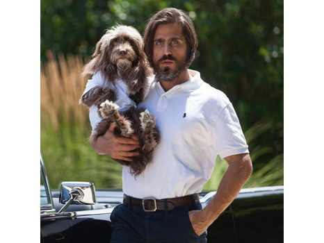 Grooming for Man and His Best Friend