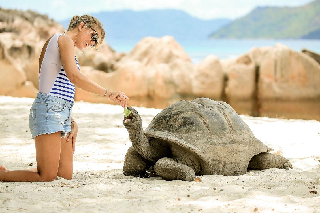 Seychely želvy