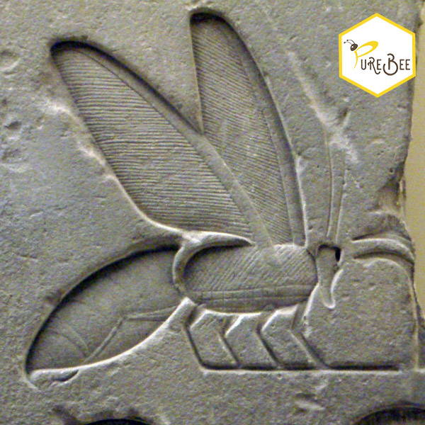 Detail of a Bee Hieroglyph from the tomb complex of Senusret I, from his