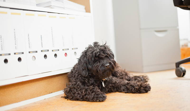 Bürohund Bruno M31.jpg
