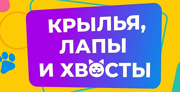 Слушатели «Радио Дача Уфа» приняли участие в фотоконкурсе «Крылья, лапы и хвосты» - Новости радио OnAir.ru