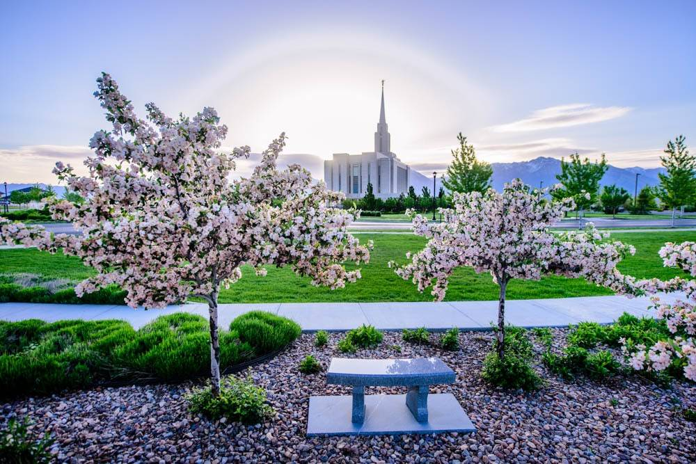 Distant LDS art photo of the Oquirrh Mountain Temple behind trees with spring blossoms.