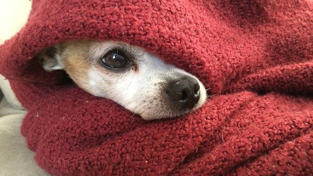 Der Hund hat sich erkältet
