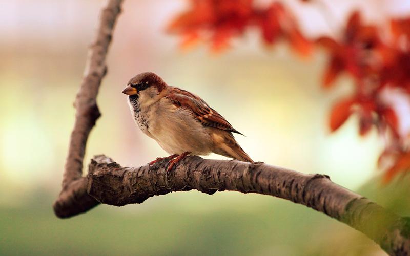 sparrow-9950.jpg
