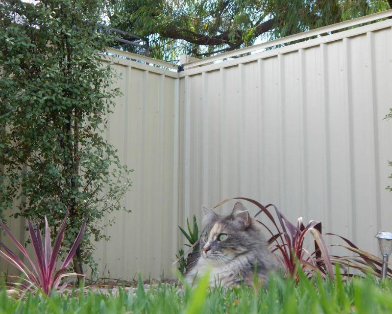 Oscillot cat containment system for backyard (fence rollers, cat fence, cat proof fence, cat proofing, yard design, indoor, outdoor)