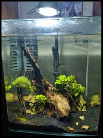 10 Shrimp Tank