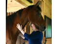 Personal Horse Wisdom Retreat!