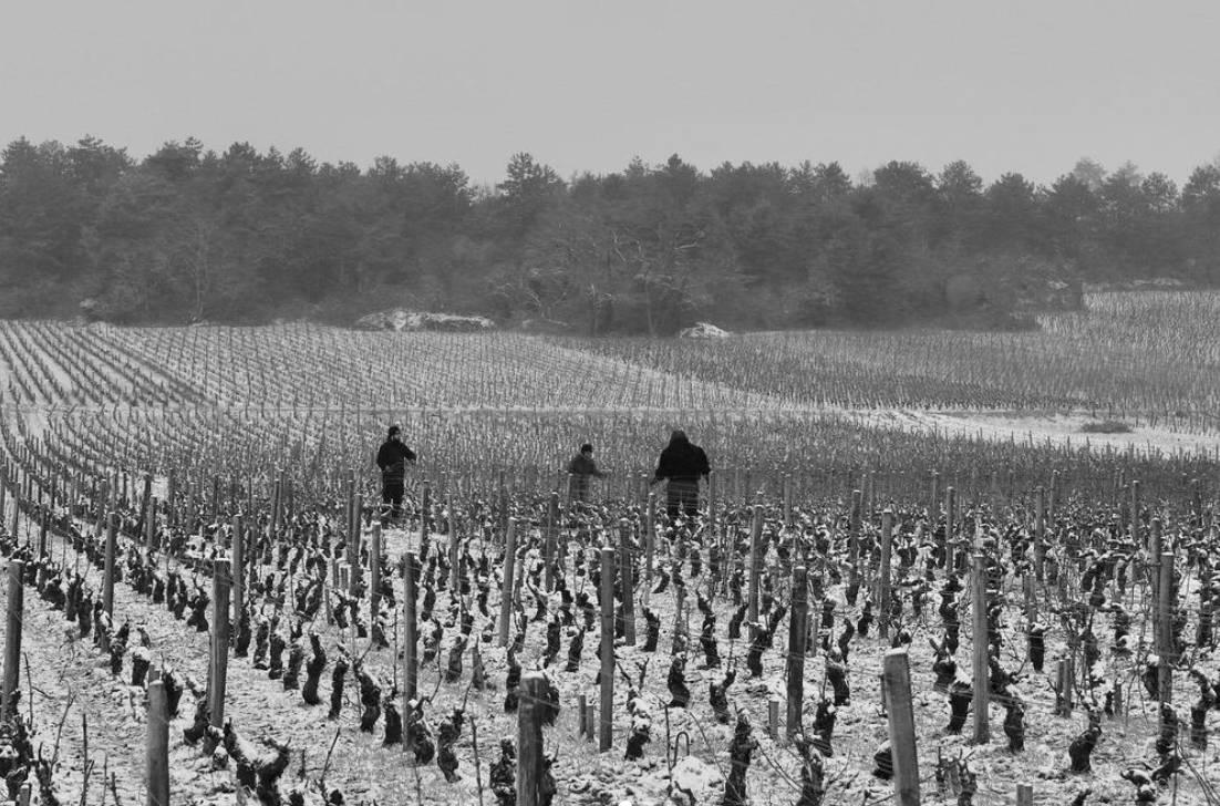 france, vin nature, rawwine, organic wine, vin bio, vin sans intrants, bistro brute, vin rouge, vin blanc, rouge, blanc, nature, vin propre, vigneron, vigneron indépendant, domaine bio, biodynamie, vigneron nature , jean fournier, laurent fournier, bourgogne, marsannay, gevrey chambertin, pinot noir, aligoté