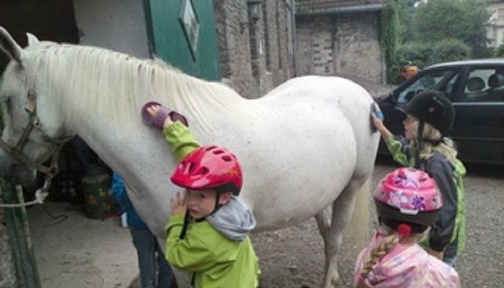 die reitzwerge kinder bürsten pferd