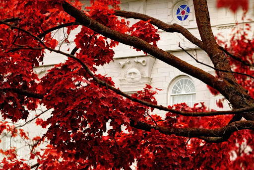 Nauvoo Temple walls behind full branches of red leaves.