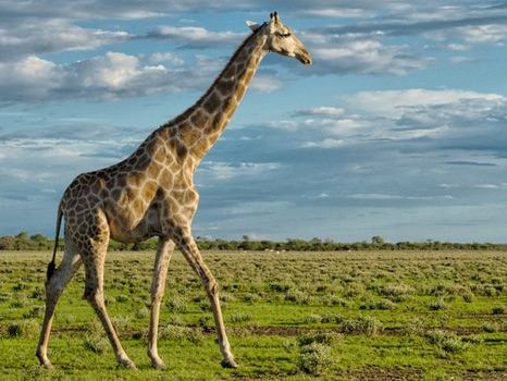 Unforgettable Safari in Namibia