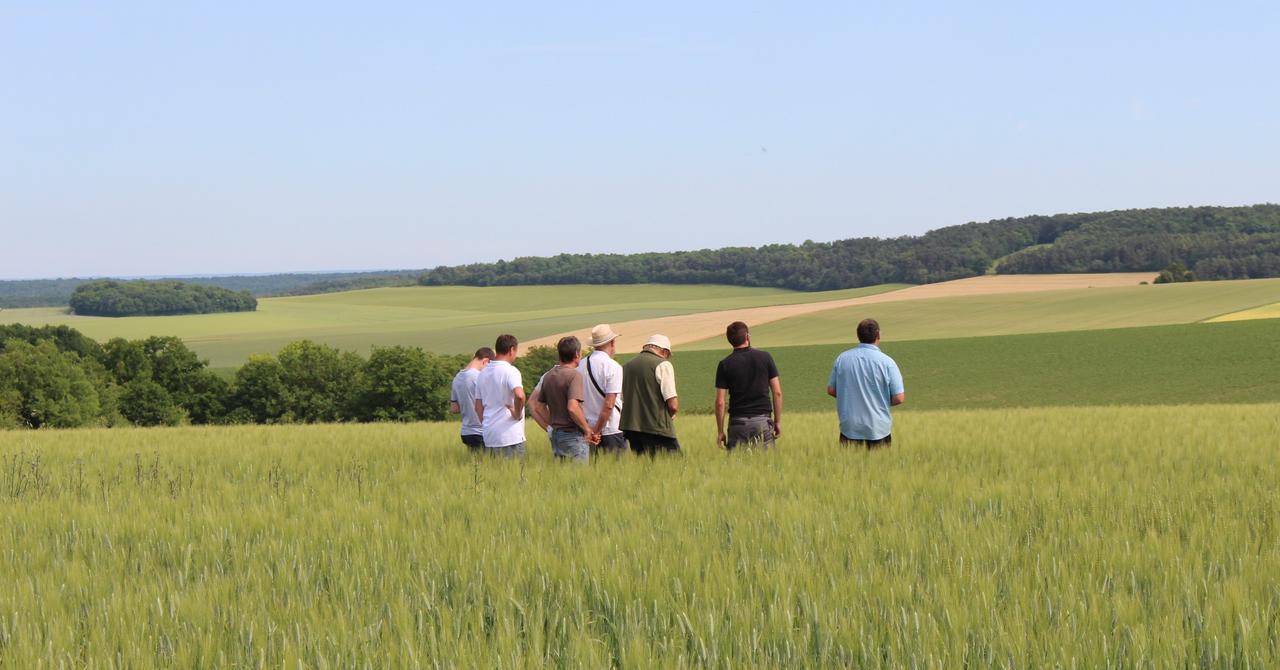agriculteurs dans un champs