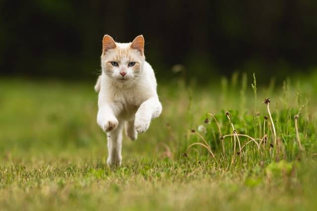 Running cat, outdoor cat, cat fence, Photo by James Hammond on Unsplash