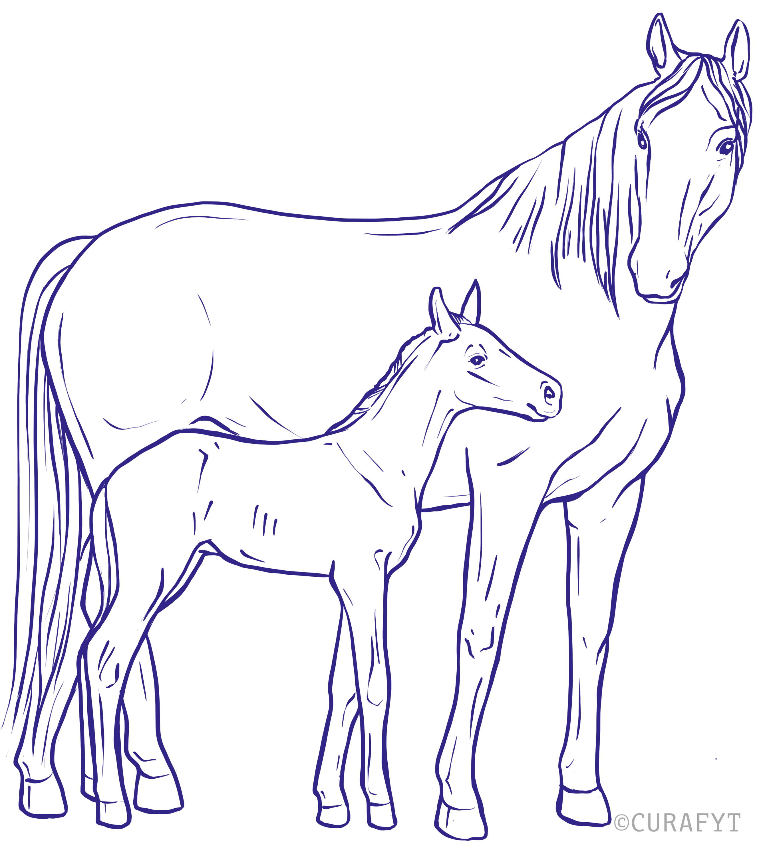 Mare with foal cartoon OESTROVUM CURAFYT