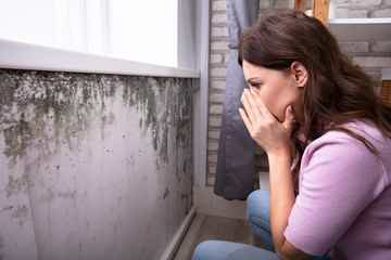 Mold & Mycotoxins – What You Can't Smell Could Be Harming You - auto