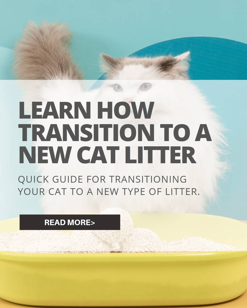 learn how to transition to a new cat litter