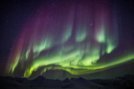 Dog sledding under starry skies and dancing aurora