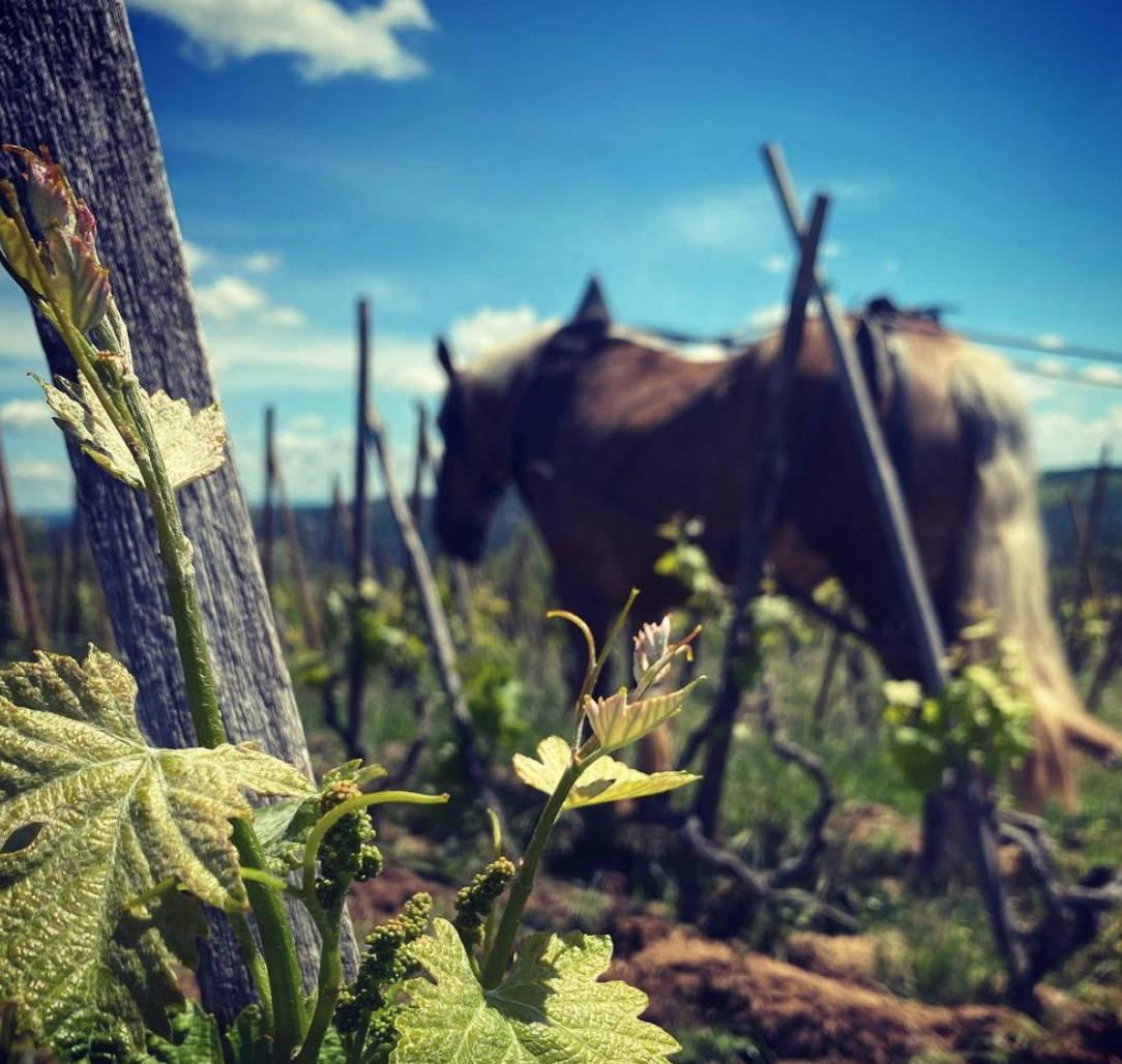 France, vin nature, rawwine, organic wine, vin bio, vin sans intrants, bistro brute, vin rouge, vin blanc, rouge, blanc, nature, vin propre, vigneron, vigneron indépendant, domaine bio, biodynamie, vigneron nature, cave vin naturel, cave vin, caviste, vin biodynamique, bistro brute, Quimper, Finistère , stéphane ogier, côte rôtie, côte-rôtie village, syrah, rhône