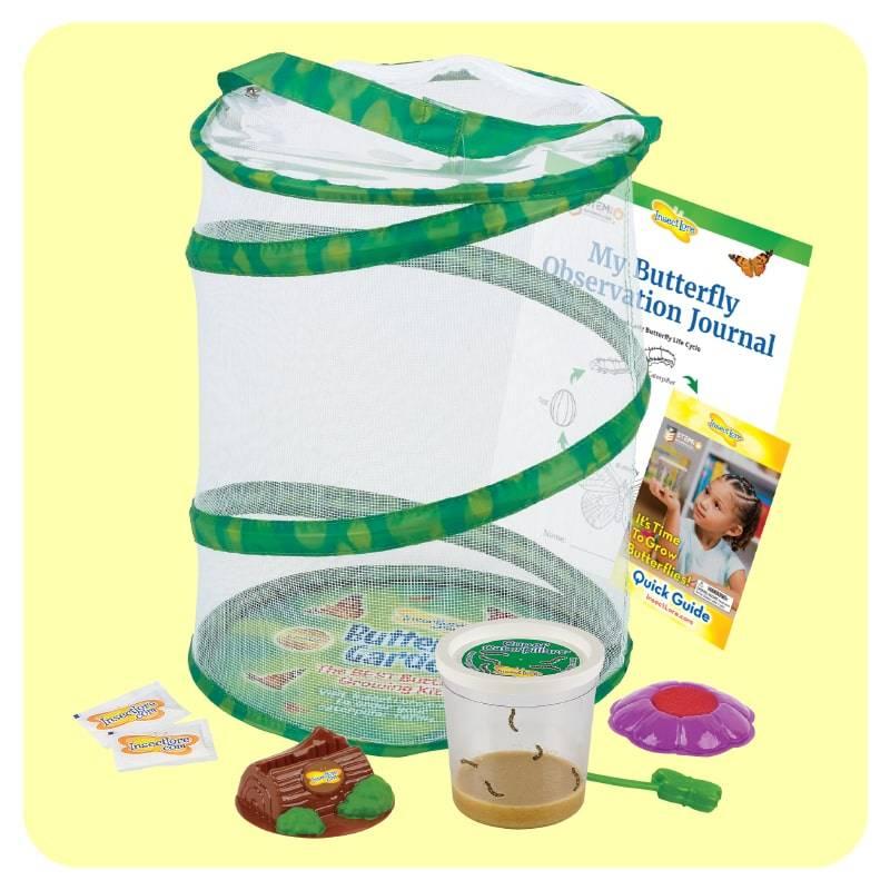Home School Butterfly Kit